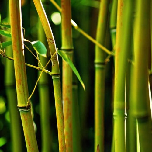 BAMBU 1 FOTO DE ecológico sostenible ecoamazon natural reciclable